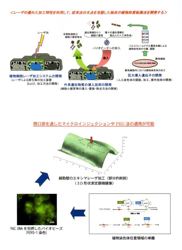 特殊レーザ加工技術を応用した新しい植物形質転換法の開発 生物系特定産業技術研究支援センター 概要