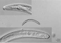 土壌線虫画像データベース