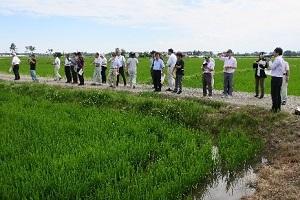 水稲圃場の視察