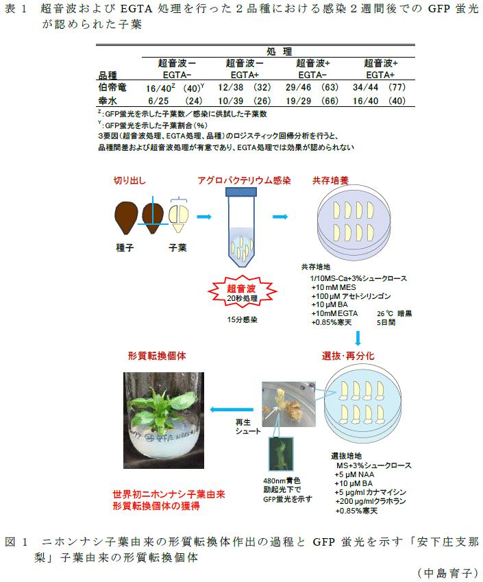バクテリ ウム 法 アグロ
