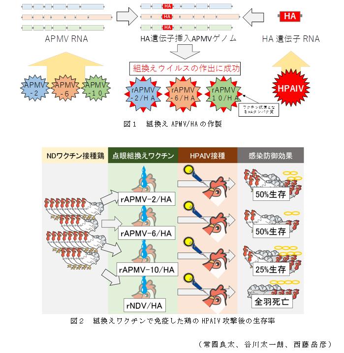 組み換え ワクチン 遺伝子