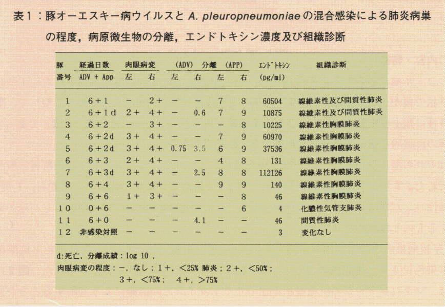 オーエスキー病ウイルス感染が豚のA.pleuropneumoniae肺炎に与える影響