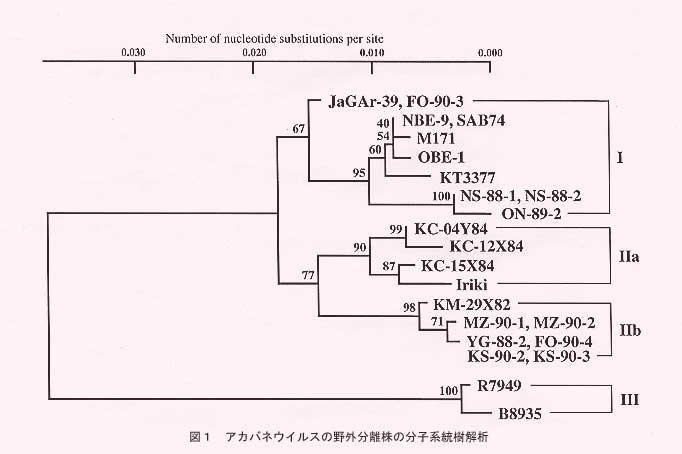 アカバネウイルスS RNAの塩基配...