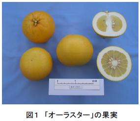 「オーラスター」の果実