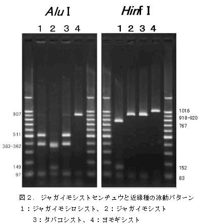 ジャガイモシストセンチュウと近縁種を識別する遺伝子診断法