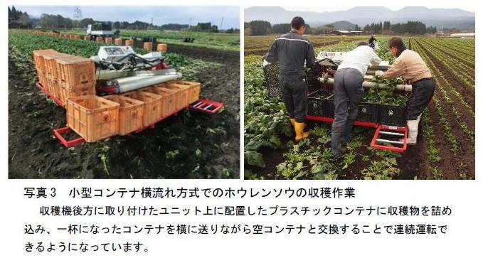 写真3 小型コンテナ横流れ方式でのホウレンソウの収穫作業