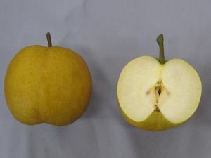 図2 「はつまる」の果実
