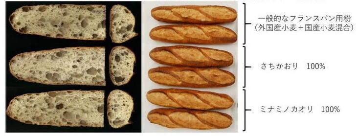 図2 一般社団法人日本パン技術研究所によるフランスパン焼成試験におけるフランスパンの内相と外観 (2012 年農研機構九州沖縄農業研究センター産材料)