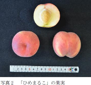 写真2 「ひめまるこ」の果実