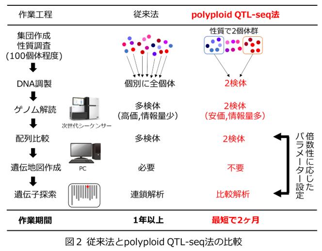 図2 従来法とpolyploid QTL-seq法の比較