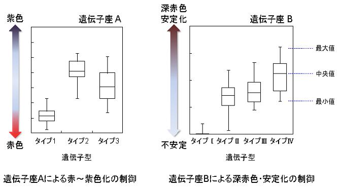 ブドウ果皮の色調を制御する二つの遺伝子座を発見   農研機構